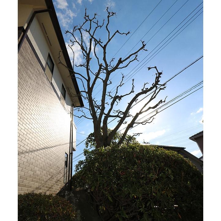 神戸市U様邸の完成写真15